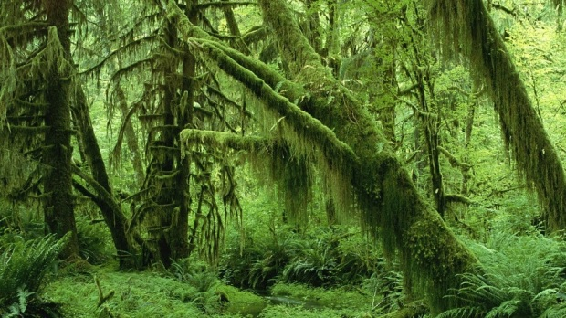 OLYMPIC NATIONAL PARK - HOH RAINFOREST