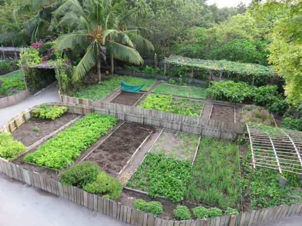 SONEVA FUSHI'S HERB & VEGETABLE GARDEN