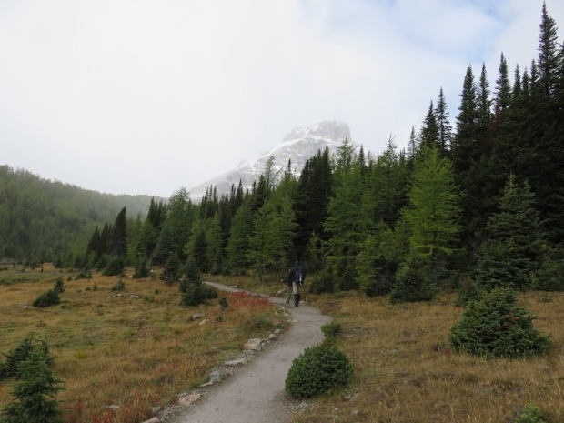 GUIDED HIKING