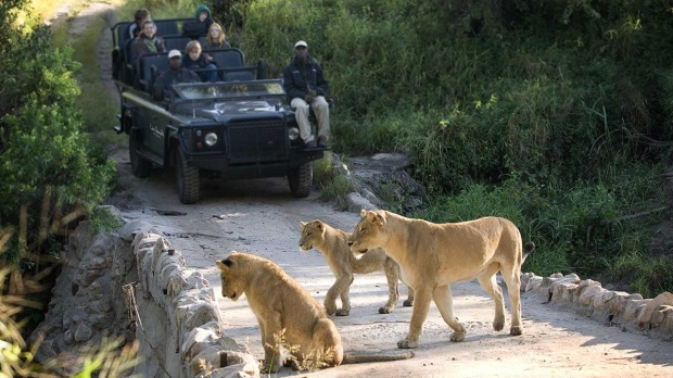 TRACK THE BIG FIVE IN KRUGER NATIONAL PARK