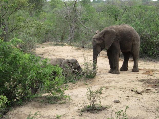 ELEPHANTS AROUND WATER HOLE NEAR LOBBY